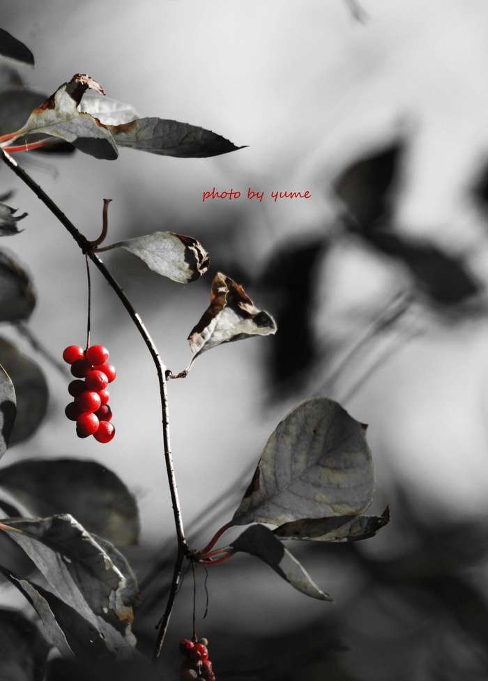 Cinnabar red_a0322950_6203013.jpg