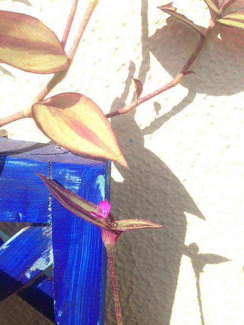 秋の庭_e0026053_13591371.jpg