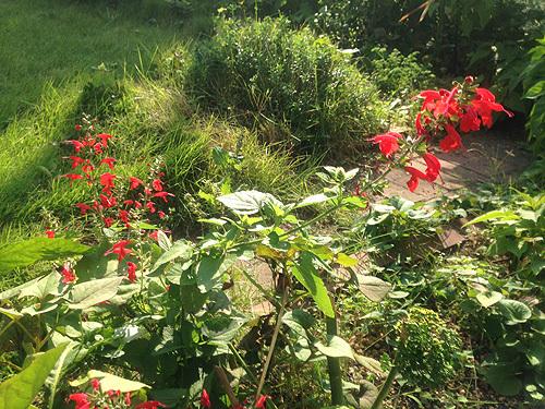 秋の庭_e0026053_13592036.jpg