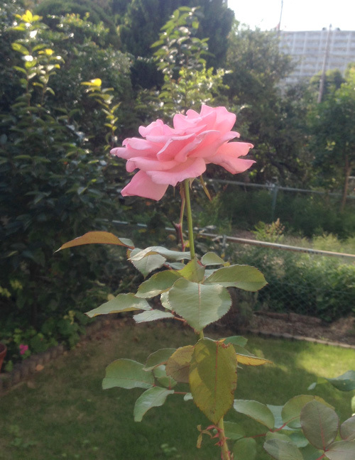 秋の庭_e0026053_13593302.jpg