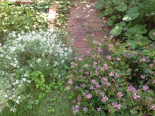 秋の庭_e0026053_13594610.jpg