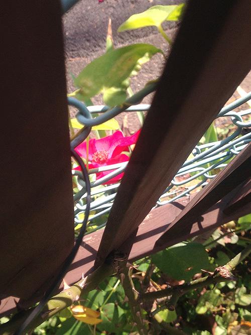 秋の庭_e0026053_13595761.jpg