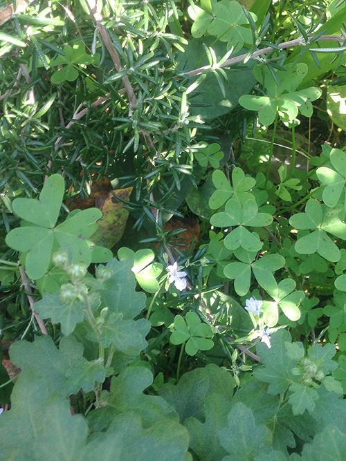 秋の庭_e0026053_14000867.jpg