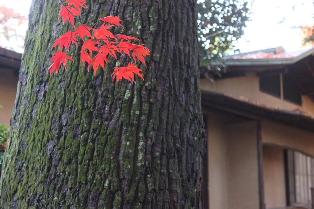 2015 聴竹居  紅葉をめでる会_b0157960_010078.jpg