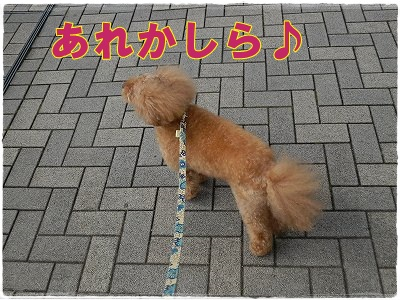 c0135363_05149.jpg