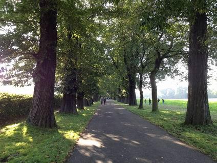 「並木道の散歩」・・・_a0280569_050380.jpg