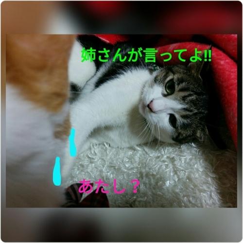 a0289878_23054051.jpg