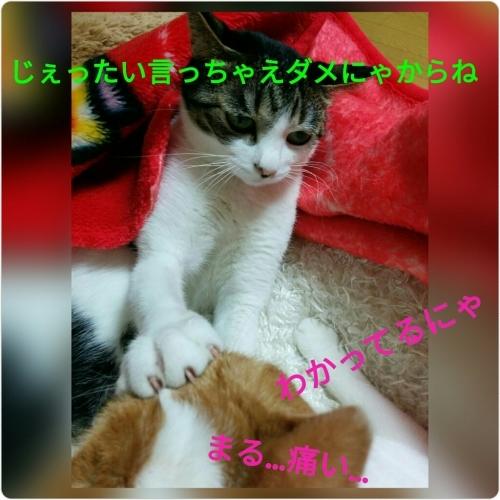 a0289878_23054719.jpg