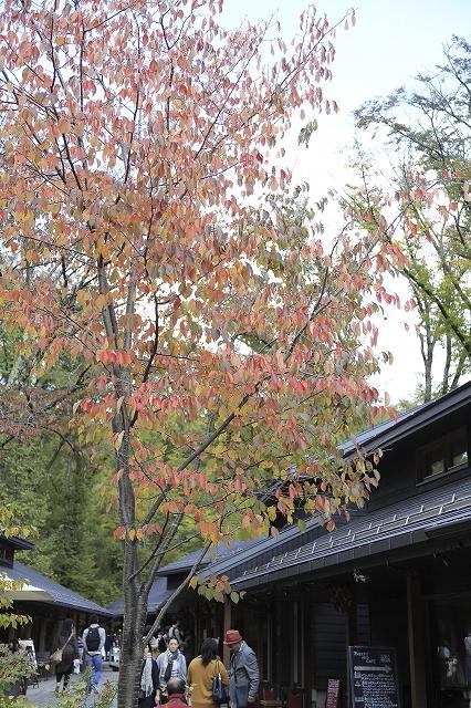 錦秋の山歩き@四阿山 2015.10.12(月)_c0213096_22420305.jpg