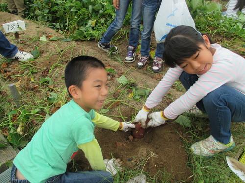 サツマイモがいっぱい採れました(^o^)_f0079749_8341194.jpg