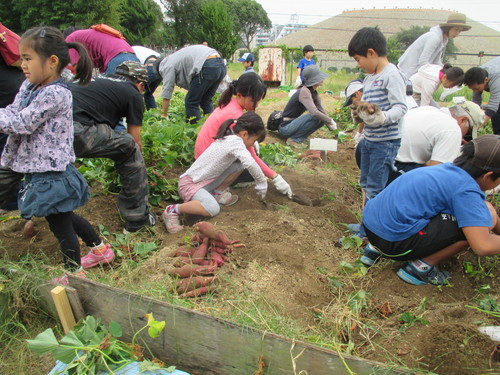 サツマイモがいっぱい採れました(^o^)_f0079749_839183.jpg