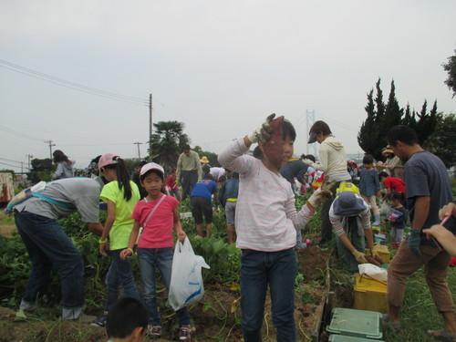 サツマイモがいっぱい採れました(^o^)_f0079749_8403493.jpg