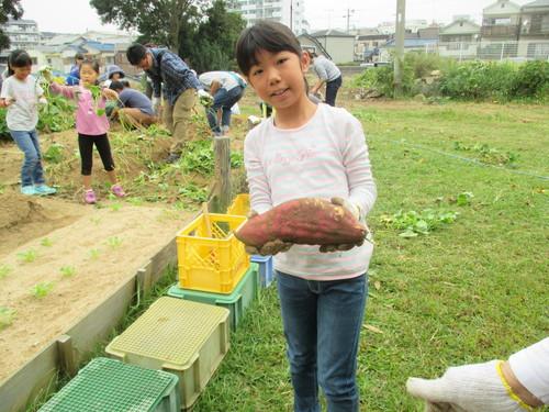 サツマイモがいっぱい採れました(^o^)_f0079749_842618.jpg