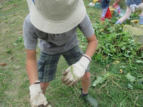 サツマイモがいっぱい採れました(^o^)_f0079749_8483622.jpg