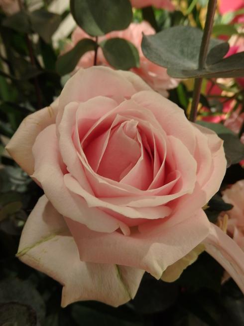 今田美奈子先生の 新宿高島屋における40年の集大成「華麗なる薔薇のおもてなし」♡。.゚。*・。♬♪*†_a0053662_17404898.jpg