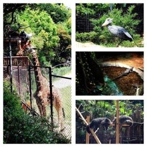 高知県立のいち動物公園_d0337795_19194613.jpg