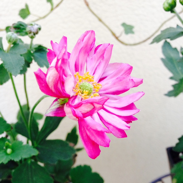秋の寄せ植え_f0204295_9405686.jpg