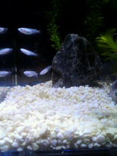 魚・肴・さかな♪_d0096499_11512661.jpg