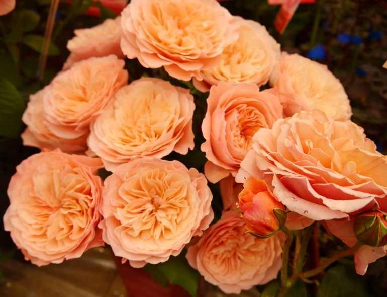 国際バラとガーデニングショウへ!_d0339703_14572776.jpg
