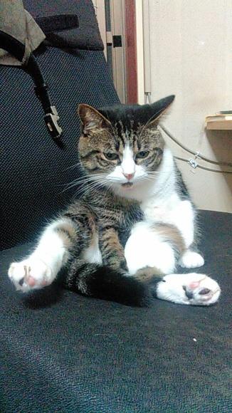 【猫】気持ちよく_f0141609_21383812.jpg