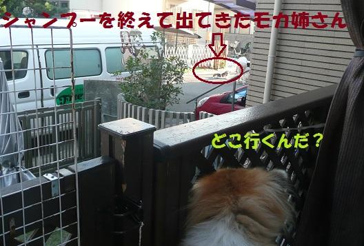 f0121712_1372524.jpg