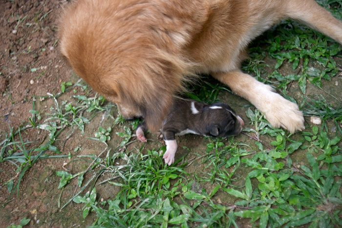 Our dog got pregnant and gave birth before we knew!_e0202828_15175152.jpg