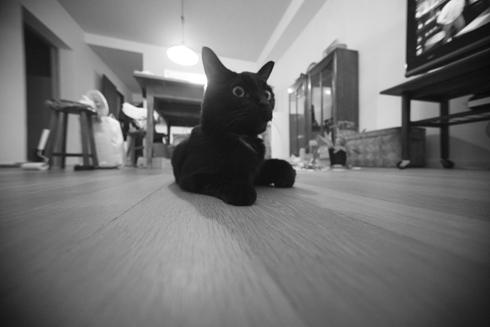 20151130 #blackcat #黒猫 #超広角_d0176130_21184156.jpg