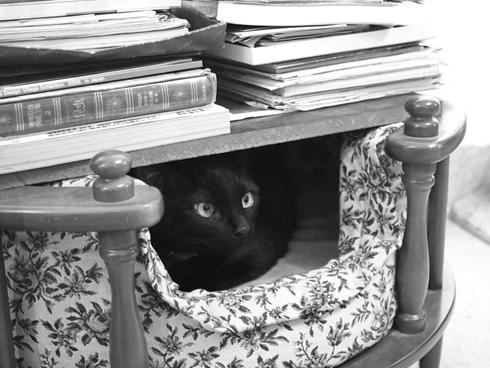 20151220 #blackcat #黒猫_d0176130_21514727.jpg