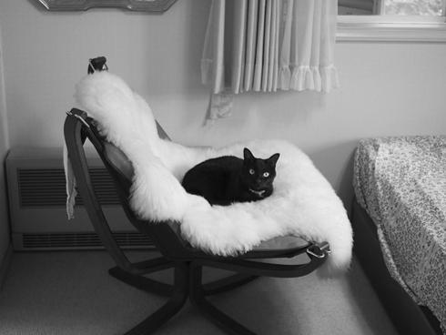 20151230 #blackcat #黒猫_d0176130_2153028.jpg