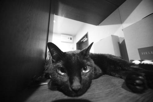 20160110 #blackcat #黒猫 #超広角_d0176130_2154191.jpg