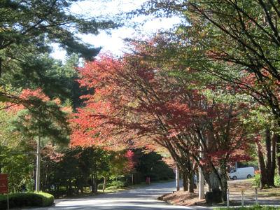 スパティオ通りの桜の紅葉2015_f0019247_095324.jpg