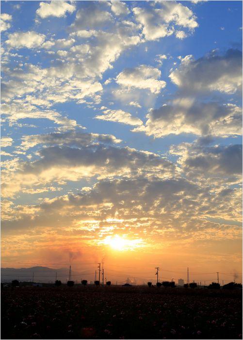 サンセット秋桜 ②_a0256349_19554966.jpg