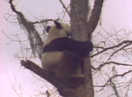 本日の配信映画は「動物映像大百科 第1巻B面 」_b0115553_111952.png