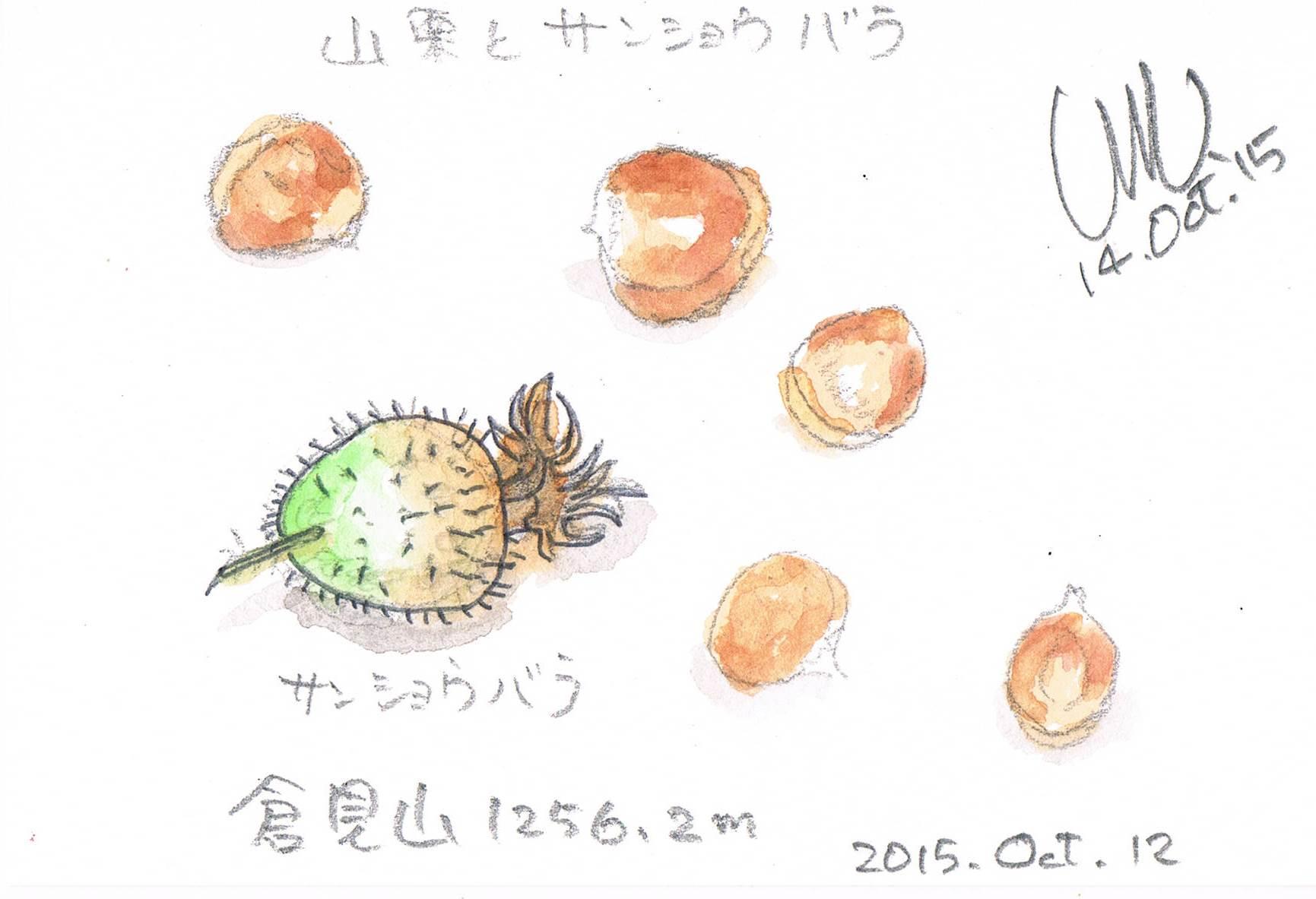 ヤマグリとサンショウバラ_e0232277_1142988.jpg