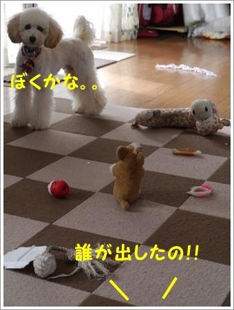 b0175688_20111864.jpg