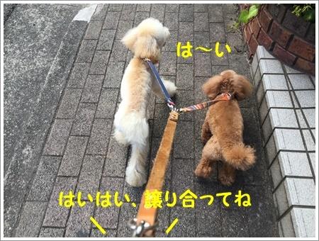 大祐もロング散歩が出来るようになったから、新しいコースを開発しないとね_b0175688_23300841.jpg