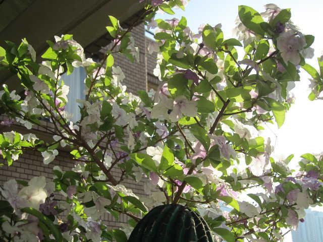 植物のパワーをいただきましょうー♪_d0339889_12065903.jpg
