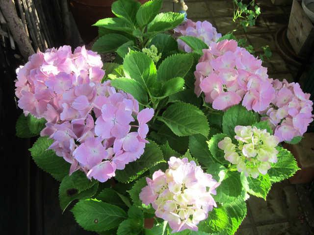 植物のパワーをいただきましょうー♪_d0339889_12065908.jpg
