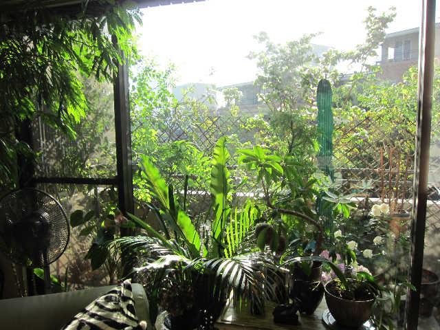 植物のパワーをいただきましょうー♪_d0339889_12065928.jpg