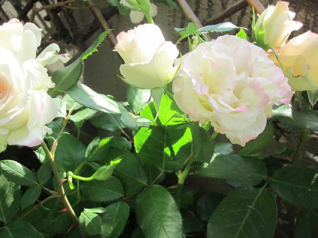 植物のパワーをいただきましょうー♪_d0339889_12065981.jpg
