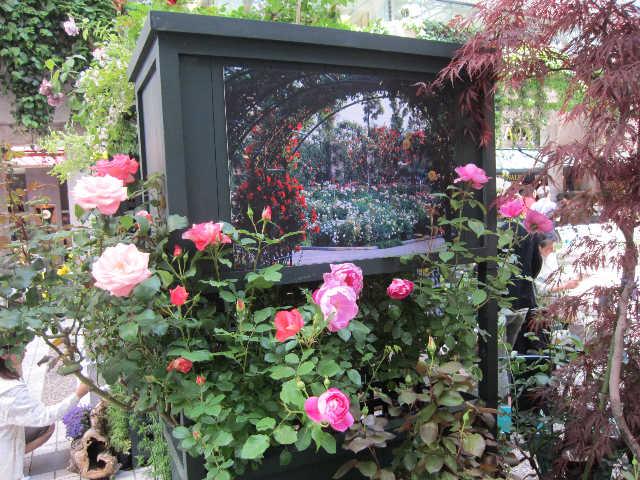 薔薇、薔薇、薔薇♪_d0339889_12070272.jpg