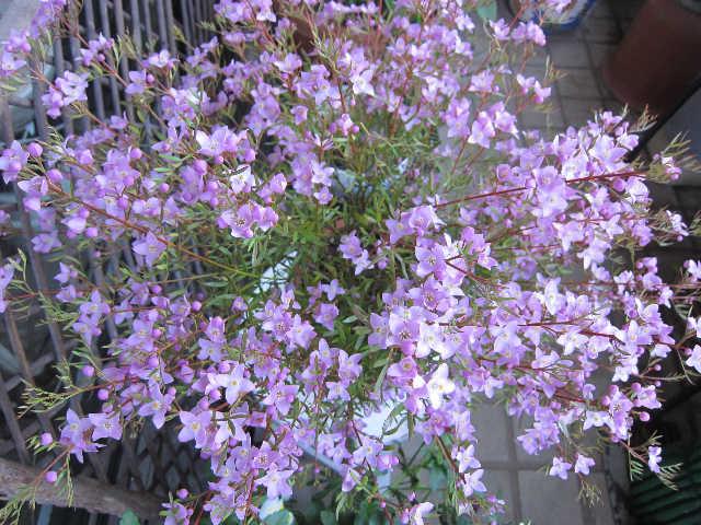 春が来た♪_d0339889_12070914.jpg