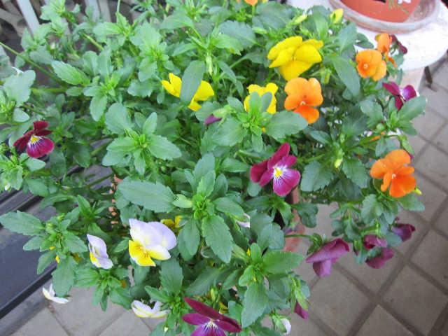 春が来た♪_d0339889_12070930.jpg