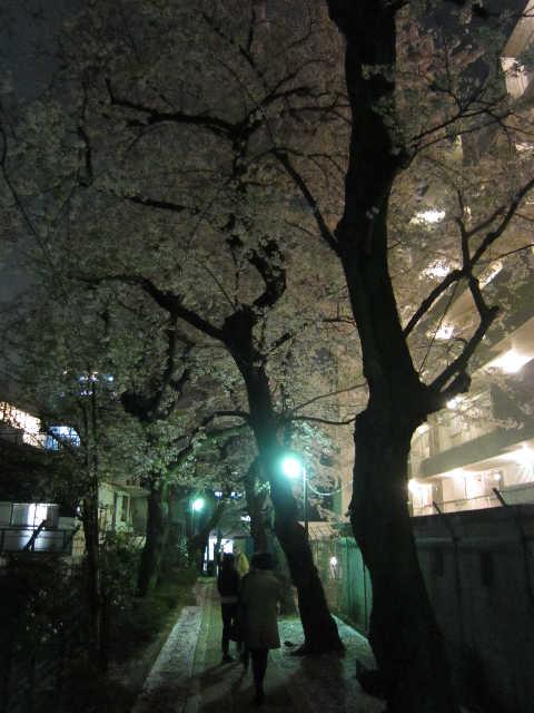 それでも桜は美しい_d0339889_12070970.jpg