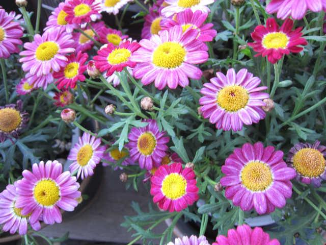春が来た♪_d0339889_12070996.jpg