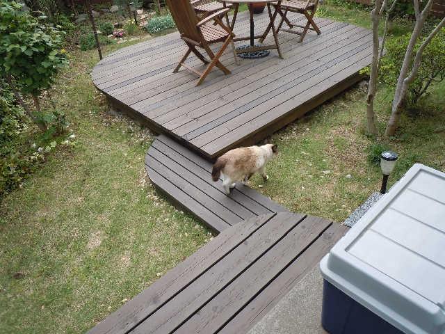 猫の小太郎のツィッター_d0339889_12083614.jpg