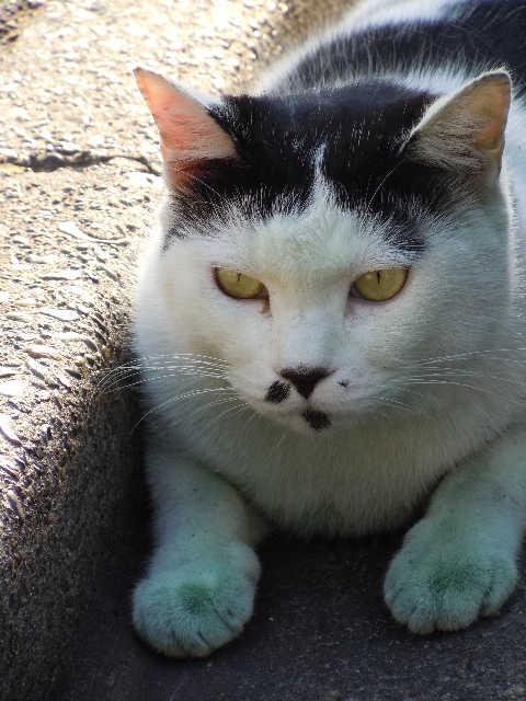 猫の小太郎のツィッター_d0339889_12083622.jpg