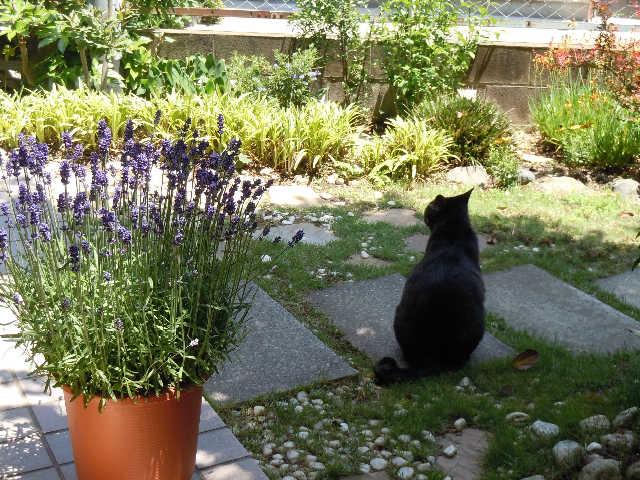 猫の小太郎のツィッター_d0339889_12083739.jpg