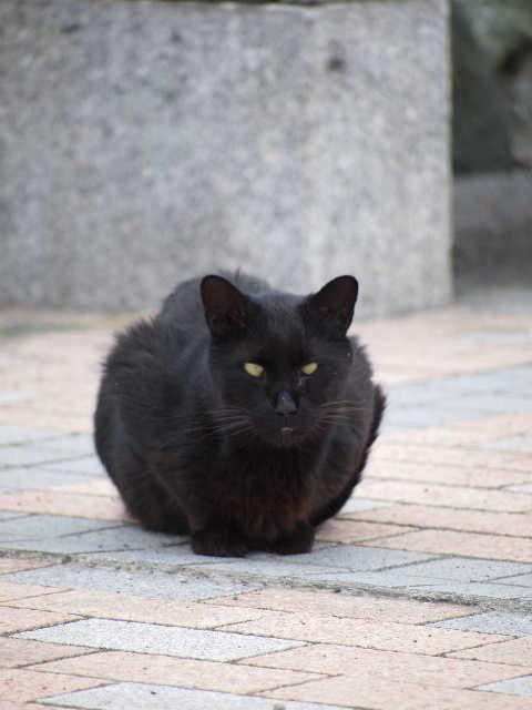 猫の小太郎のツィッター_d0339889_12084240.jpg