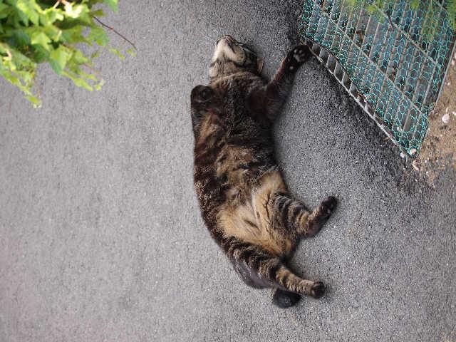 猫の小太郎のツィッター_d0339889_12084285.jpg